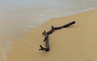 Driftwood on Karon Beach